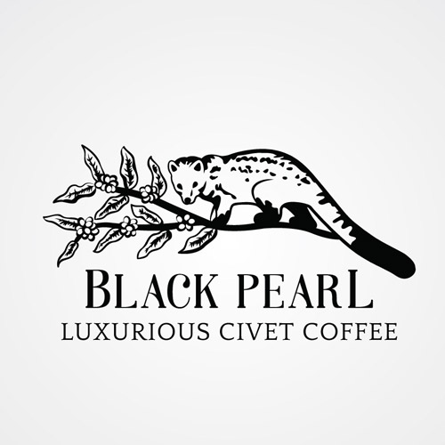 'Black-Pearl'-Logo-Design-Preview-1-Featured